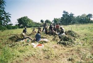 A photo taken by a farmer in Upper West Region, Ghana